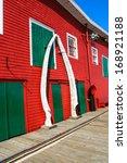 Whale Bones   Nova Scotia
