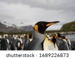 Penguins in antarctica  south...