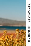 Small photo of Crowley lake landscape with grass and flowers in spring