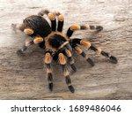 Colourful Subadult Female...