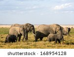 Small photo of African elephants with calves grazing in Amboseli Park, Kenya