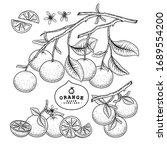 vector sketch citrus fruit... | Shutterstock .eps vector #1689554200