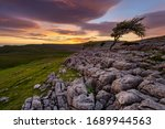 Windswept Lone Tree With Beautiful Sunset Reflecting Onto Rock Formations In The Yorkshire Dales Countryside.