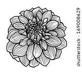 hand drawn dahlia flower. black ... | Shutterstock . vector #169008629