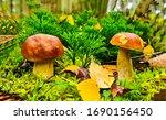 Mushroom In Autumn Forest. ...