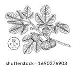 vector sketch fruit decorative... | Shutterstock .eps vector #1690276903
