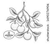 vector sketch citrus fruit... | Shutterstock .eps vector #1690276906