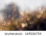 plants and bushes in the... | Shutterstock . vector #169036754
