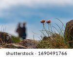 Flowers Growing On The Cliffs...