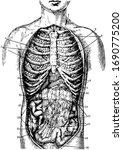 collar bone and left lung ... | Shutterstock .eps vector #1690775200