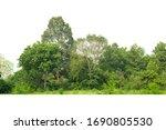 Green Treeline Isolated On...