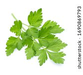 Green Coriander Leaves On A...