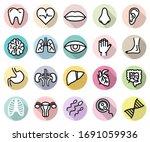 vector set of human body parts... | Shutterstock .eps vector #1691059936