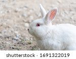 White Rabbit Outdoors.close Up...