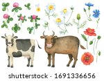 Funny Watercolor Cow  Bull And...