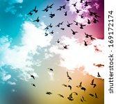 dove flying on blue sky freedom ...   Shutterstock . vector #169172174