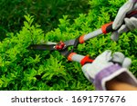 hands with garden shears and safety gutters pruning large plant stems. Topical garden and home. landscaping and gardening enthusiasts concept - stock photo