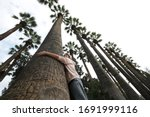 a girl in a pink sweater is dreaming and hugs a palm tree and other palm trees around and a photo from a low angle view