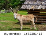 A Donkey Stands In A Fenced In...