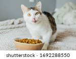 Cat Eats Dry Food From A Large...