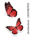Two Red  Colored Butterflies...