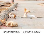 A Colony Of Feral  Stray Or...