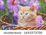 Cute Little Kitten With Flowers ...