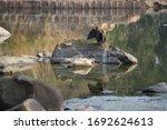 Cormorant Bird On A Rock ...