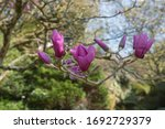 Bright Pink Spring Flowers On A ...