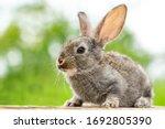 Beautiful Funny Grey Rabbit On...