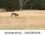 A Whitetail Buck In A Field. ...