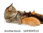 Mother Cat With Small Kittens...
