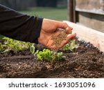 How to use organic fertilizer...