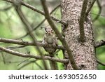 Small Cute Chipmunk On A Tree