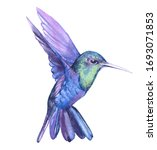 Watercolor Hummingbird  Bird...
