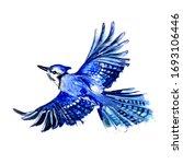 Blue Watercolor Bird Jay In...