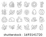 plants line icons. mint leaf ... | Shutterstock . vector #1693141720