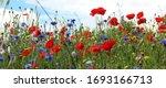 Fields Of Wild Flowers In...