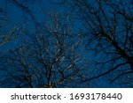 Branches Of A Bare Tree In...