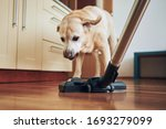 Naughty Dog Barking On Vacuum...