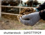 Manure Or Manure In The Hands...