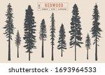 Redwood Tree Silhouette Vector...