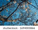 Magnolia Tree Branch Complex...