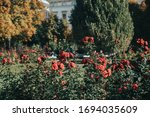 Beautiful Park With Red Flower...