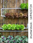 hydroponic farm   Shutterstock . vector #169423724