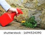 A Gardener Spraying Weed Killer ...