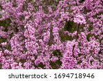 The Redbud Trees Are In Full...