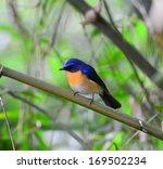beautiful bird  standing on a  ... | Shutterstock . vector #169502234