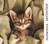 A Small Cute Kitten Is Sleeping ...