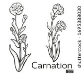 vector illustration. carnation... | Shutterstock .eps vector #1695388030
